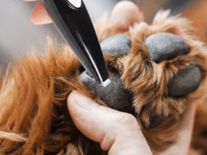 Low Noise Electric Pet Local Trimmer