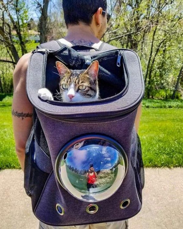 """""""The Fat Cat"""" Cat Backpack"""