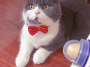 LICKI-CIOUS CAT TREAT