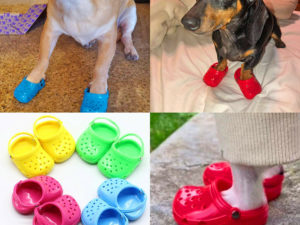 🔥Buy 1 Get 1 Free🔥Dog Crocs Are Now A Thing, And Your Dog Probably Wants Them